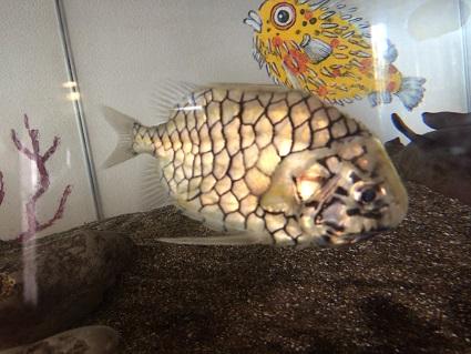 松笠魚.jpg